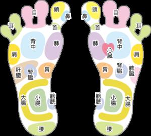 足裏の反射区